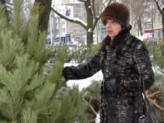 Впервые! Стоимость живых ёлок в Донецке определяют разноцветные квадраты (ФОТО)