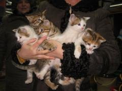 В мороз котят подбросили вместе с Библией (ФОТО)