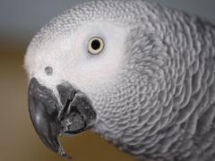 В Киеве даже попугай побывал на Евромайдане и научился петь гимн (ВИДЕО)