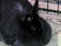 В Донбассе милиция героически раскрыла похищение кролика (ВИДЕО)