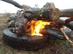 В горячей точке Донбасса: на прицеле - дикие кабаны