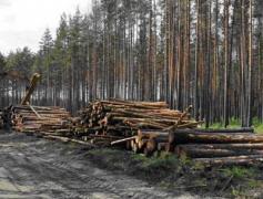 В Донбассе поймали за руку уничтожителей леса