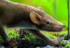 """Палеонтологи нашли доисторического """"крысоежа"""""""