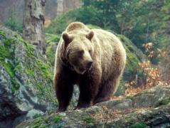В Хабаровске медведь ворвался в торговый центр (ВИДЕО)