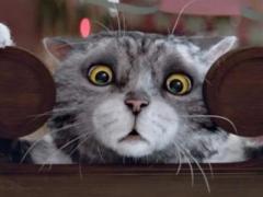 Ролик с рождественским котом бьет рекорды просмотров (ВИДЕО)