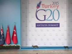 Кошачье трио на саммите G20 порвало интернет (ВИДЕО)
