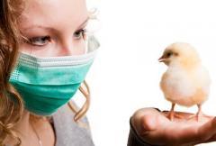 """Во Франции """"проснулся"""" птичий грипп"""