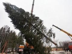 В Киев привезли 25-метровую красавицу (ВИДЕО)