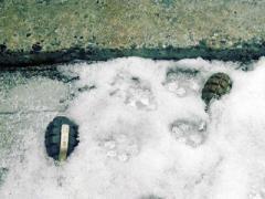 В Донецке боевые гранаты валяются прямо посреди улицы