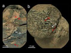Ученые доказали, что на Марсе была кислородная атмосфера