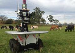 В Австралии создали робота-пастуха