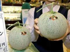 В Японии на аукционе продали две дыни за баснословную сумму