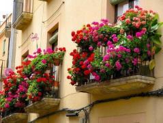 В Мариуполе стартует конкурс «Цветущий город»