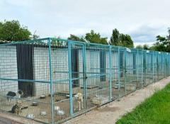 С начала боевых действий в донецкий приют попало порядка 500-600 собак с ранениями