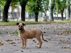 Кого в Донецке решили клеймить и заносить в электронную базу