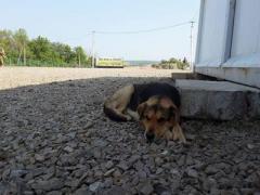 Хитрый пес Сепар живет на передовой и кормится то у наших бойцов, то у террористов, - Геращенко