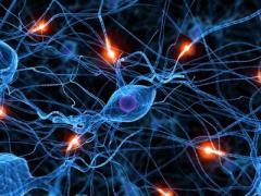 Американские ученые научились восстанавливать нервные клетки