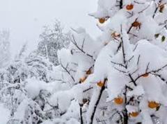 Народные синоптики предрекают зимой снег по колено и лютые морозы