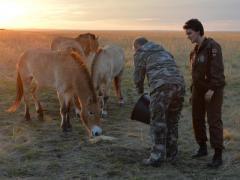 """""""Типа вождь при деле"""", -  россияне смеются над тем, как Путин кормил лошадей"""