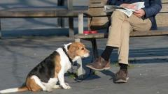Испанская полиция создает базу ДНК собак для поиска нерадивых владельцев