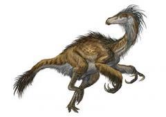 В Мьянме нашли хвост динозавра