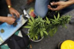 В Уругвае открыли музей марихуаны