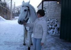 Как живет эвакуированный из Крымского конно-спортивный клуб