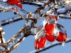 На выходных в Украине станет теплее