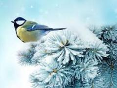 Погода в Украине 13 января: преимущественно без осадков, местами снег с дождем