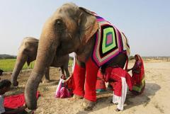 В Индии слонов переодели в пижамы, чтоб не мерзли