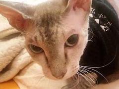 """Жуткая новость: в """"серой зоне"""" боевики использовали живую кошку для """"растяжки"""""""