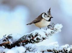 Погода в Украине 4 февраля: облачно, мокрый снег, дождь