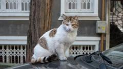 Кошек собираются признать частью экосистемы Киева