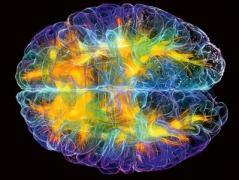 Эти  факты о человеческом мозге изменят вашу жизнь
