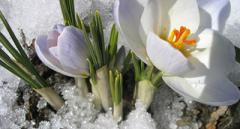 Синоптик: 24 февраля в Украину придет весна