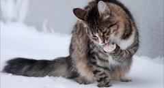 Харьков вслед за Киевом хочет признать кошек частью экосистемы города