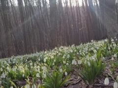 Погода в Украине 10 марта: тепло, пасмурно, местами дождь