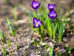 Погода в Украине 31 марта: пасмурно, местами дождь