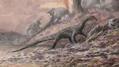 В Танзании обнаружили останки предка всех динозавров