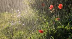 Гидрометцентр: тепло приходит в Украину, но дожди не прекратятся