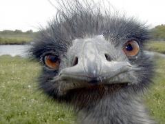 Под закрытую Раду сбежались «страусы» (фото)