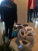 В Ровенской обл. правоохранители изъяли янтарь на сумму 2 млн