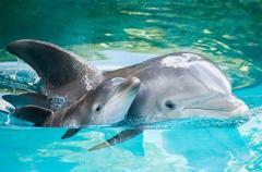 Кто ответит за массовую гибель дельфинов под Одессой. ФОТО