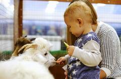 Сегодня в Северодонецке открывается контактный зоопарк