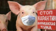 Беларусь не пускает свинину из Полтавской и Одесской областей