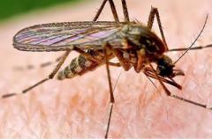 Как защититься от комаров: самые простые способы