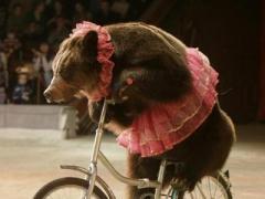 Латвийский Сейм запретил использование животных в цирке