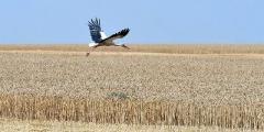 Земельная реформа на 90% подготовлена, но нуждается в обсуждении