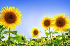 Украинцам дали прогноз погоды на ближайшие дни