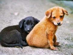 Проблема бездомных собак в Краматорске будет решаться. На пушистых бродяжек  готовы тратить 4 млн грн ежегодно